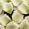 Paste Pink Edged Green & Ivory  Paper Rose Petals